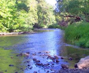 Roark Creek Trail