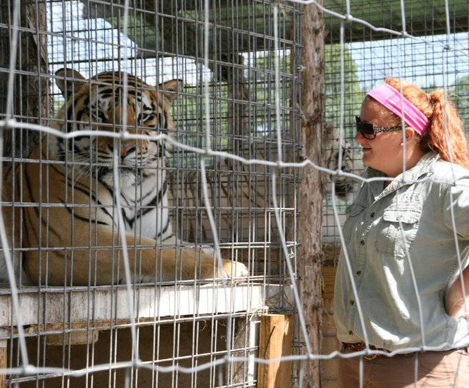 Meet the Cats at Branson's National Tiger Sanctuary