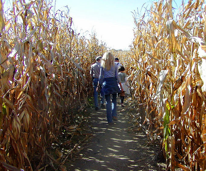 Check Out These Corn Mazes in the Ozarks This Fall