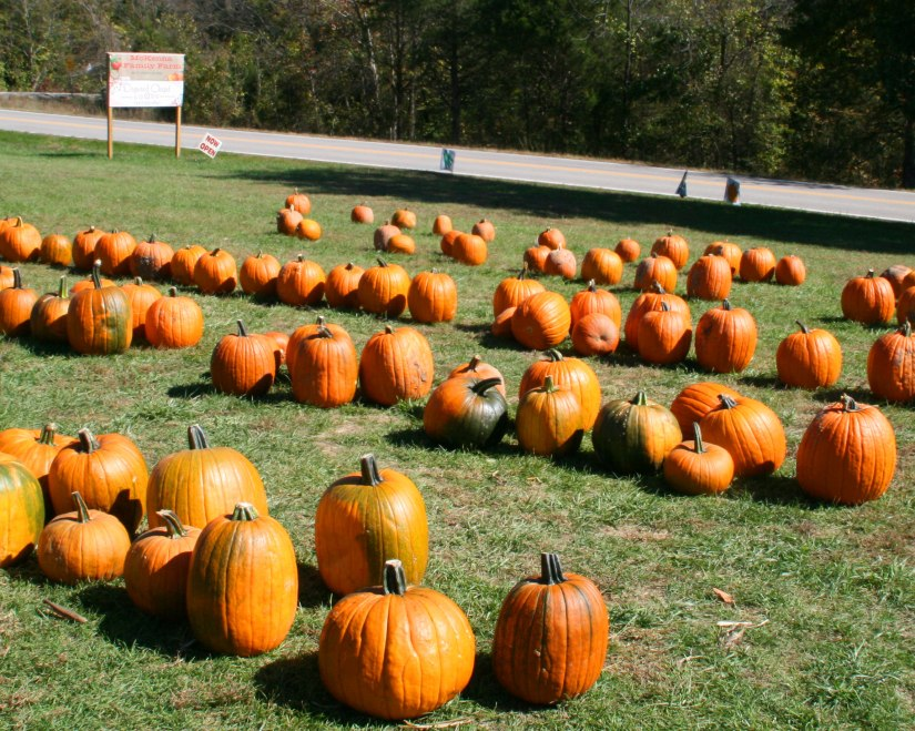 Stop By McKenna's Pumpkin Patch this Fall