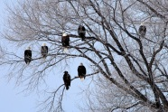 eagle 6