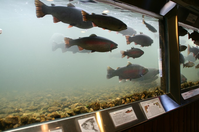 A Look Inside the Shepherd of the Hills Fish Hatchery